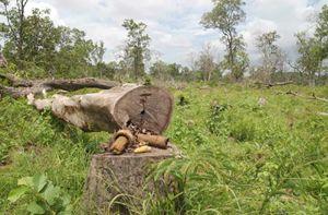 Risultati immagini per Salvare le foreste