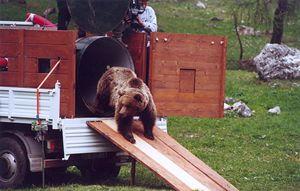 Daniza nel 2000 (In copertina: foto di C. Frapporti).