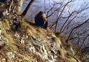 Trentino, l'uomo e l'orso: una convivenza complessa