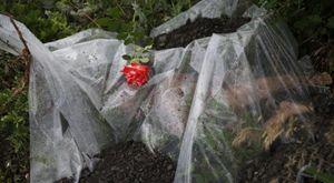 Una rosa sul corpo di uno dei passeggeri dell'aereo abbattuta sull'Ucraina (Reuters).