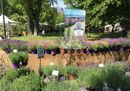 A Milano torna Orticola: in mostra le piante più belle e rare