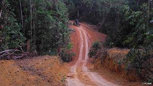 Taglialegna e allevatori potenti stanno abbattendo la foresta dei Kawahiva, nell'Amazzonia brasiliana.  © FUNAI