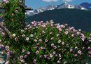 4Il Giardino della Rosa di Ronzone_ArchivioGrandiGiardiniItaliani.JPG