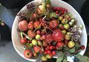 ORTICOLARIO 2019_Bacche e piccoli frutti.jpeg