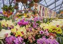 assets_Uploads_gallery_Flower_shows_Photos_190321LLU7109 - Copia.jpg