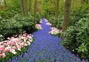 Keukenhof park 8 - River of flowers.jpg