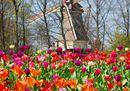 Keukenhof windmill.jpg