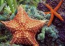 stella_marina-750x450.png