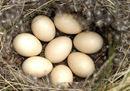 Curiosità sulle uova, simbolo della Pasqua e della rinascita