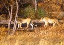 © Shadrach  Mwaba Senior Wildlife Officer WWF Zambia (2) (3).jpg